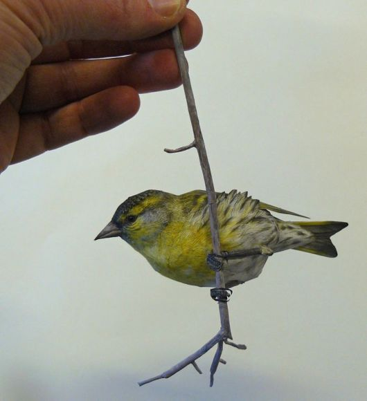 Talented Artist Created Realistic Birds From Paper