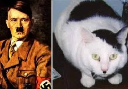 Funniest Peculiar Cats