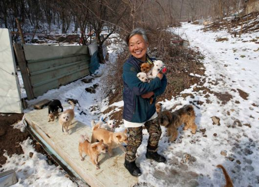 Courageous South Korean Woman Is Raising 200 Rescued Dogs