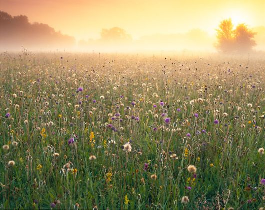 International Garden Photographers Of The Year