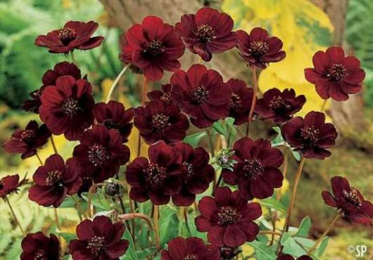 Top 10 Incredibly Rare Flowers