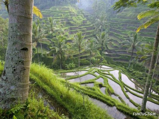 The Incredible Indonesia