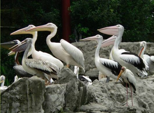 The Jurong Bird Park In Singapore