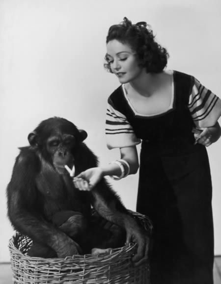 Pictures Of Chimpanzees Acting Like People