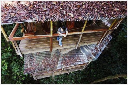 Amazing Tree House Village