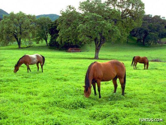 Beautiful Horses Wallpapers