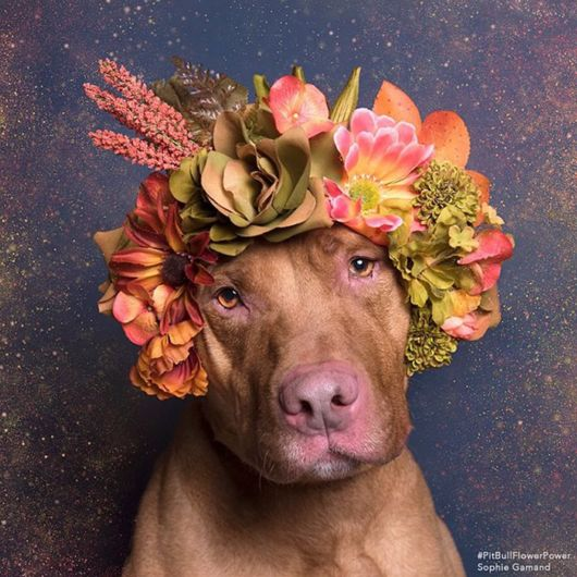 Amazing Pit Bull Flowers For Dogs