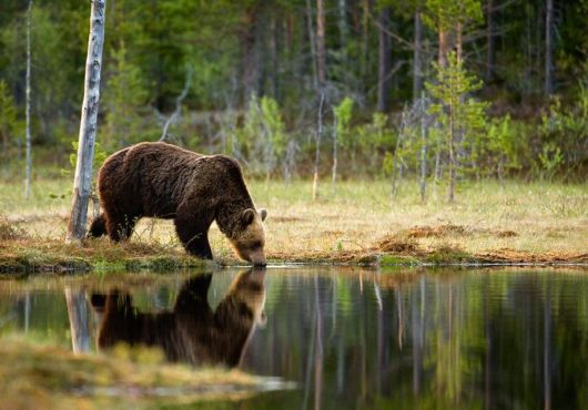 Animals And Their Reflections