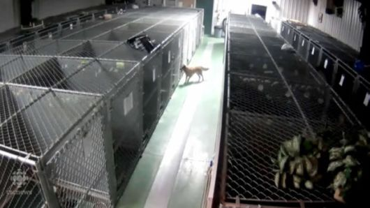 Daring Dog Escapes From Kennel To Comfort Abandoned Crying Puppies