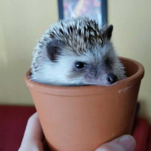 Adorable Pictures To Celebrate Hedgehog Day