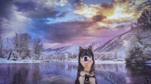 Cute Rescued Husky Helps Owner To Find New Passion For Photography
