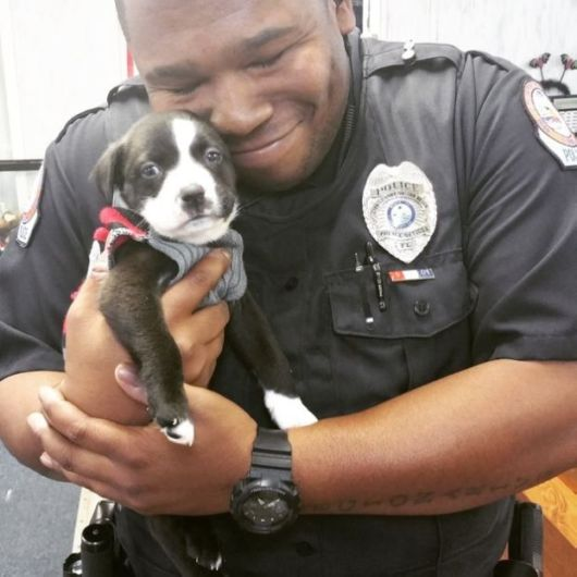 Adorable Relationship Of Police Officer And Abandoned Puppy